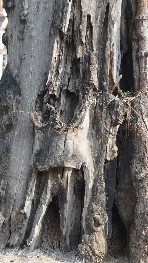 Tree-Ogre